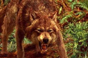 werewolf-jacob-black-9197552-600-400